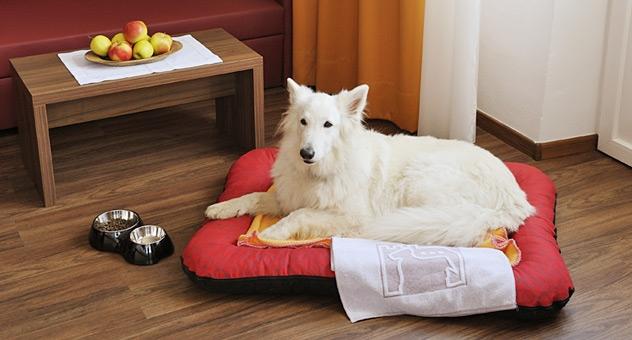 Urlaub für Mensch und Hund