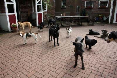 Pfotenranch - Hundepension, Hundesalon, Hundefriseur & Hundebetreuung