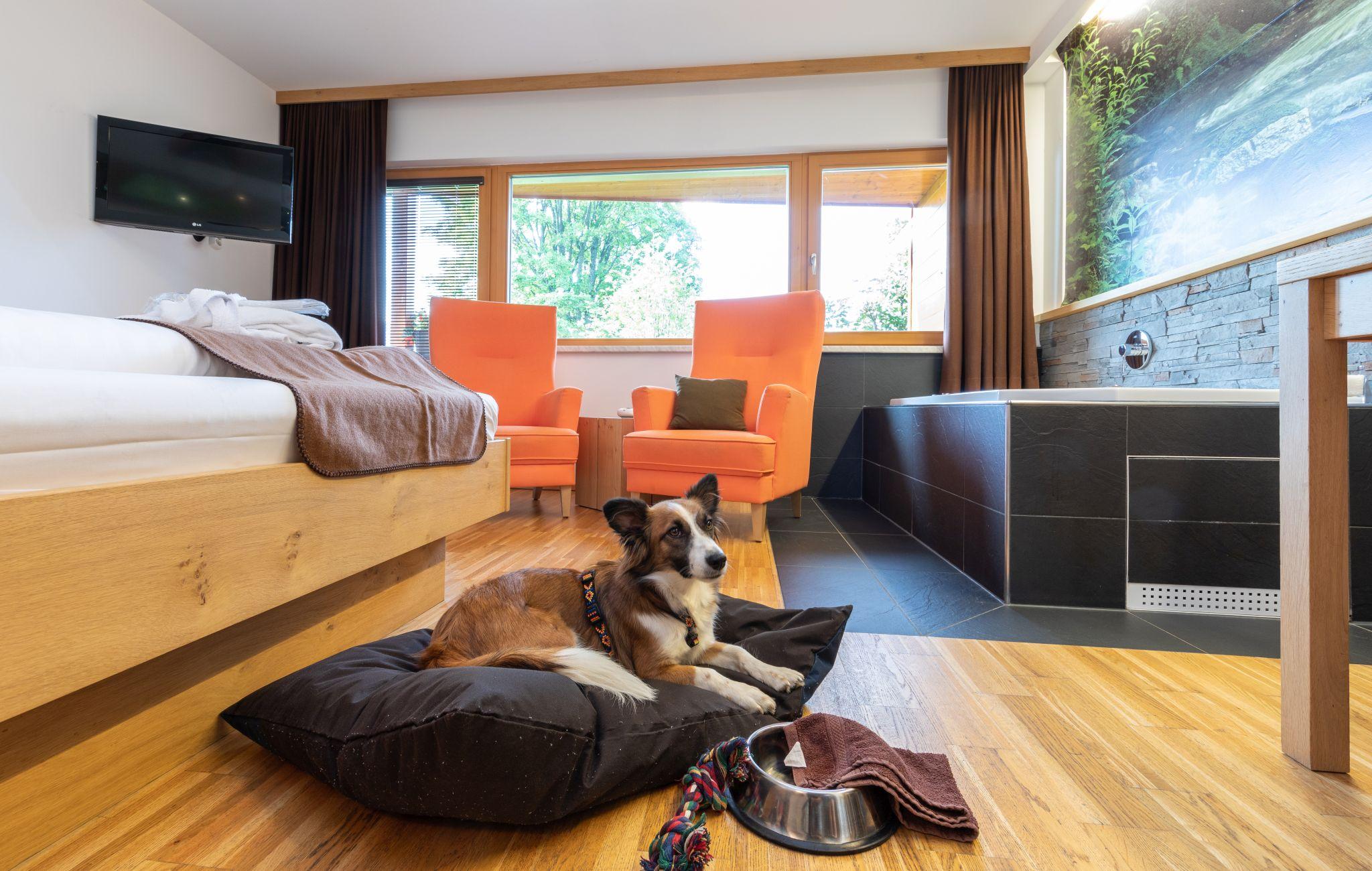 Hundefreundliche Zimmer